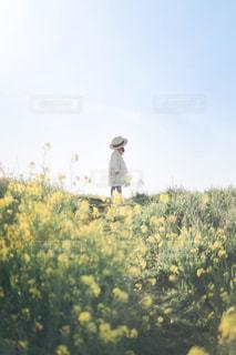 菜の花の写真・画像素材[2073079]