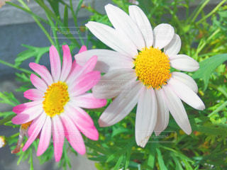 近くの花のアップの写真・画像素材[1104173]