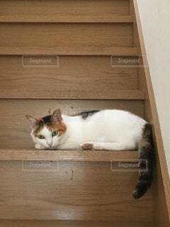 階段で休憩中の三毛猫の写真・画像素材[1102401]