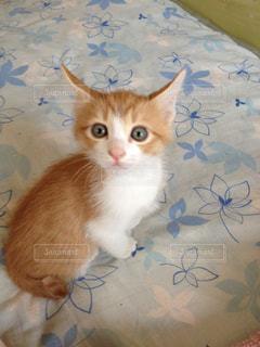 二ヶ月の子猫の写真・画像素材[1102486]