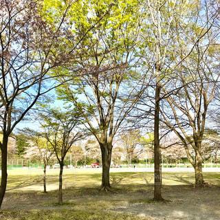 春の写真・画像素材[1102110]