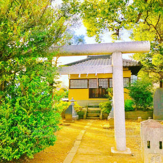 神社の写真・画像素材[1102112]