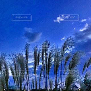 秋の夜空とススキの写真・画像素材[1102141]