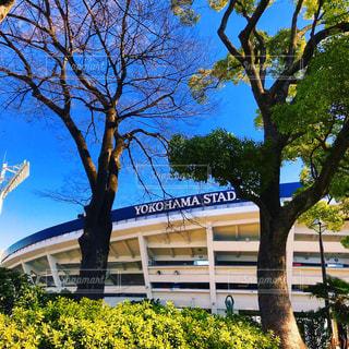 横浜スタジアムの写真・画像素材[1102143]