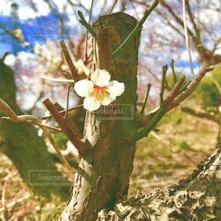一輪の花の写真・画像素材[1102145]