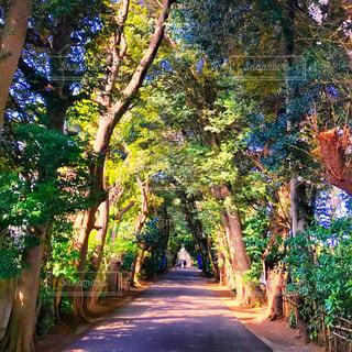 新緑と神社の参道の写真・画像素材[1102150]