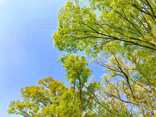 新緑と青空の写真・画像素材[1106560]