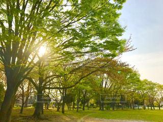 公園の木陰の写真・画像素材[1106661]