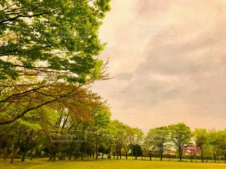 夕方の緑あふれる公園の写真・画像素材[1108980]