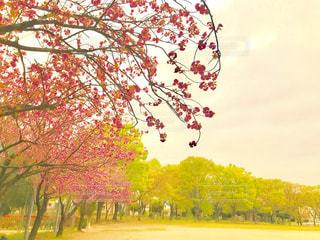 夕方の公園の写真・画像素材[1108995]