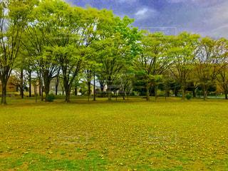 公園の樹木とグラウンドの写真・画像素材[1111164]