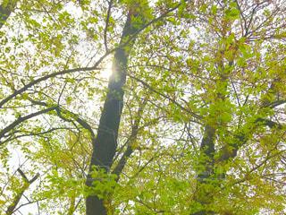 公園の木陰の写真・画像素材[1111276]