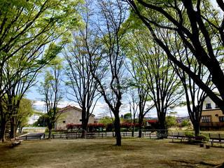 新緑の公園とベンチの写真・画像素材[1116482]