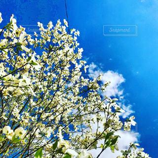 木の花の花瓶の写真・画像素材[1116509]