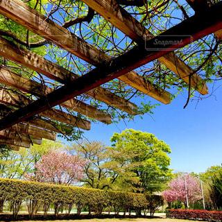 春おか広場のベンチからの眺め - No.1118827