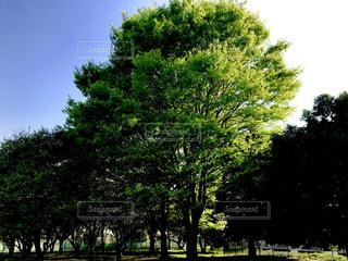 公園の木々の写真・画像素材[1120836]