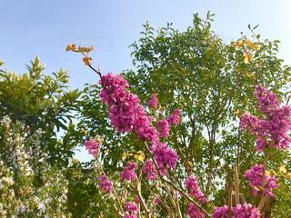 散歩の途中のピンクの花の写真・画像素材[1120838]
