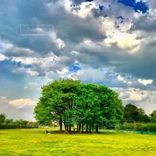 春おか広場の林と青空の写真・画像素材[1124654]