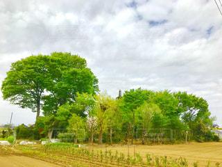 埼玉県さいたま市見沼区の林。の写真・画像素材[1131205]