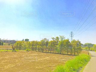 埼玉県さいたま市見沼区の畑の風景の写真・画像素材[1137795]