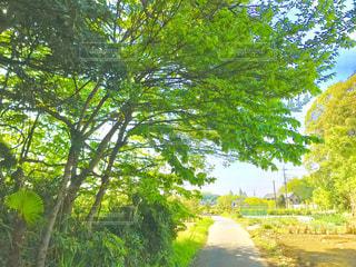 新緑に囲まれた田舎道の写真・画像素材[1137796]