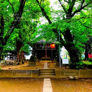 灯がともる小深作神明神社の写真・画像素材[1143213]