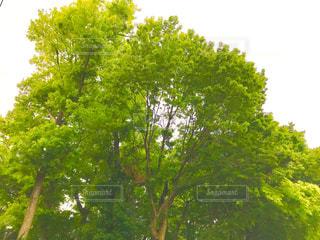 林の写真・画像素材[1144430]