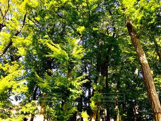 新緑の森 - No.1147919