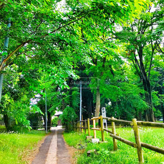 風渡野緑地公園の写真・画像素材[1154350]