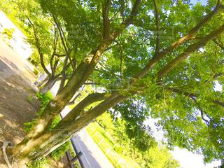 公園の新緑の写真・画像素材[1164831]