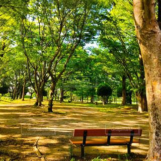 公園のベンチの写真・画像素材[1164834]
