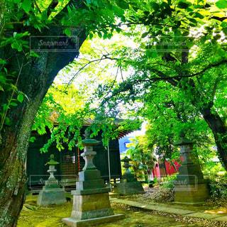神社と新緑の写真・画像素材[1164840]