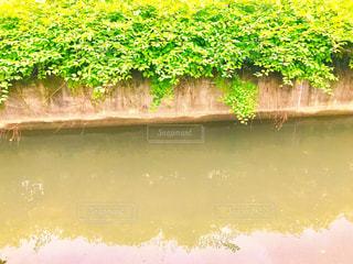 見沼代用水路の写真・画像素材[1170100]