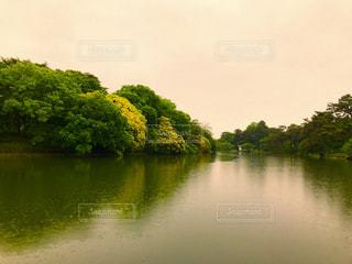 大宮公園の池の写真・画像素材[1170542]