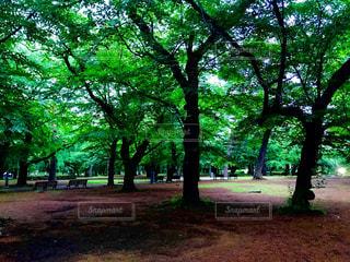 大宮公園の新緑の写真・画像素材[1170545]