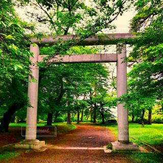 埼玉県護国神社の大鳥居の写真・画像素材[1170548]