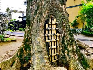 武蔵一宮氷川神社の参道の大木の根元の写真・画像素材[1170550]
