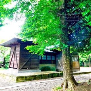 風渡野天神社の新緑の写真・画像素材[1172247]
