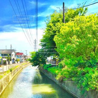 見沼代用水路の写真・画像素材[1175733]
