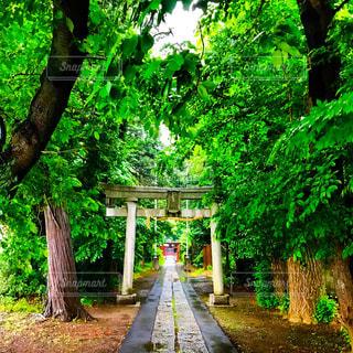 雨の中の神社の写真・画像素材[1179965]