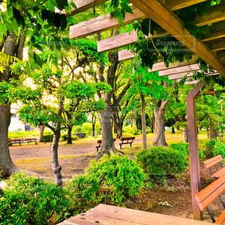 公園のベンチからの風景の写真・画像素材[1186195]