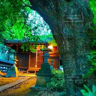 神社の灯りの写真・画像素材[1186297]