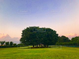 公園の林の写真・画像素材[1201447]