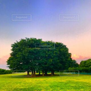 公園の森林の写真・画像素材[1201448]