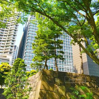 和田倉噴水公園の写真・画像素材[1206324]