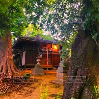 夕方の神社の写真・画像素材[1222295]