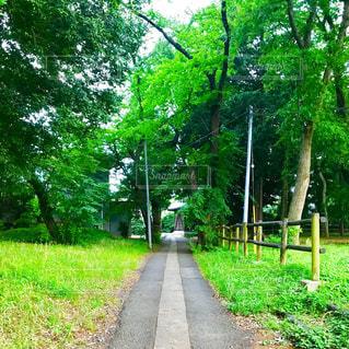 新緑の散歩道の写真・画像素材[1232877]
