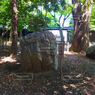 三波石の写真・画像素材[1235373]