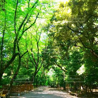 靖國神社の境内の写真・画像素材[1235374]