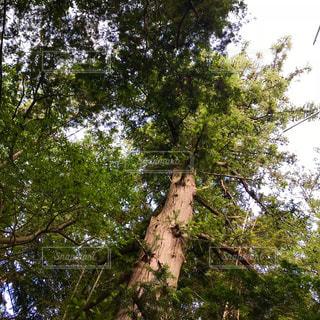 境内の新緑。の写真・画像素材[1265724]